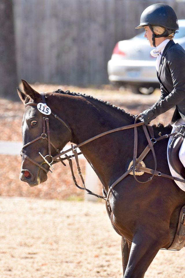 the gants crack in up american saddlebred